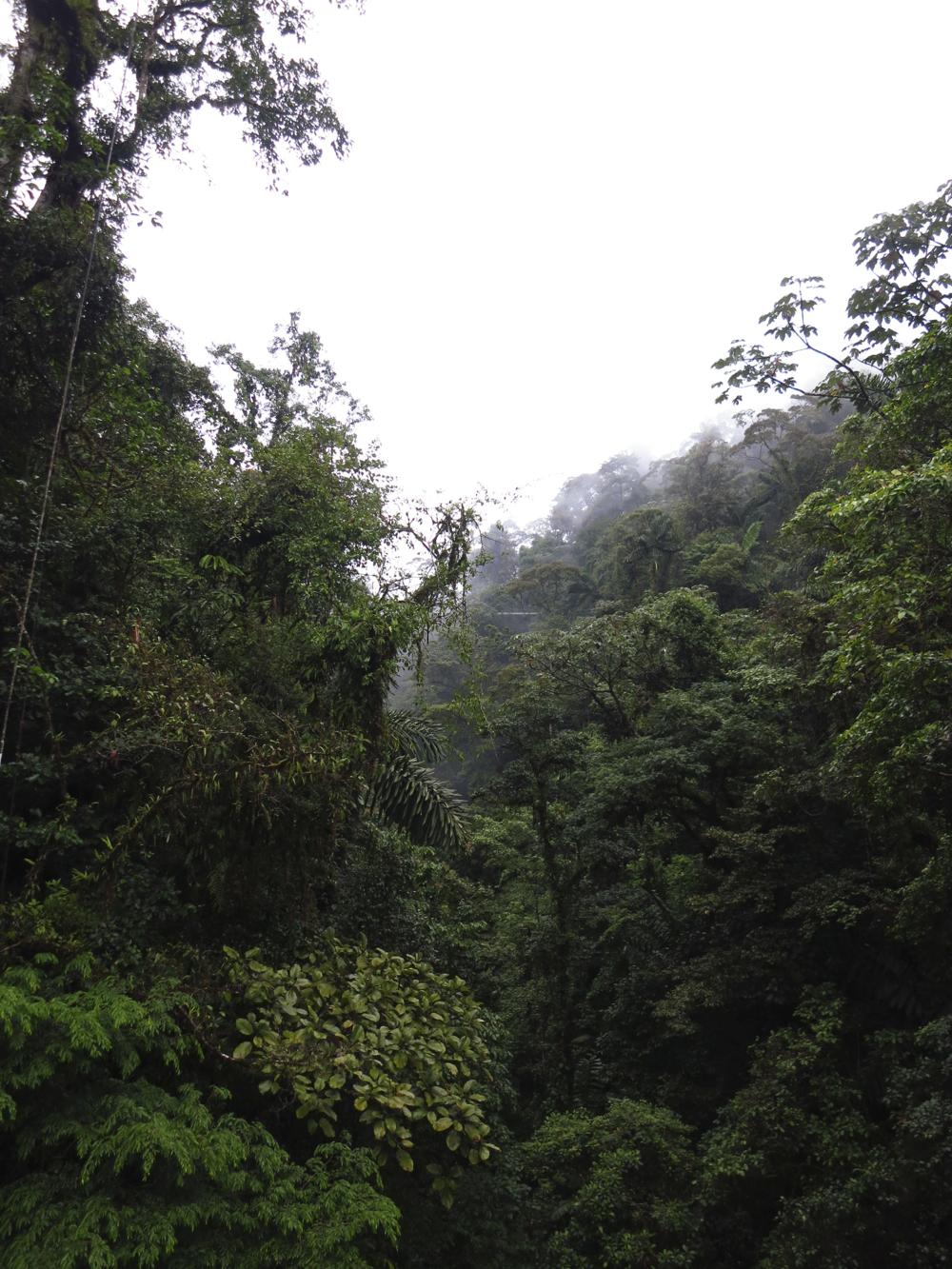 gcasterianforest