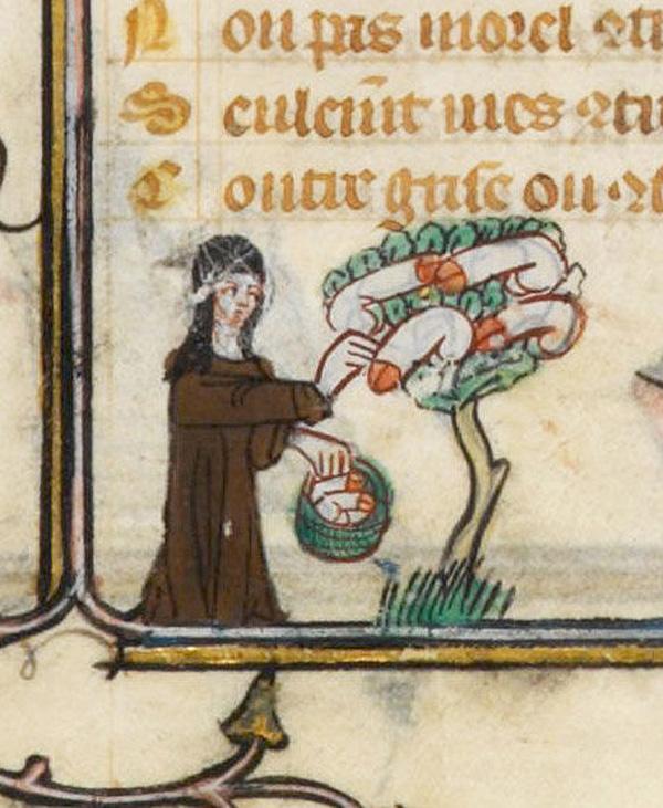 phallus_tree