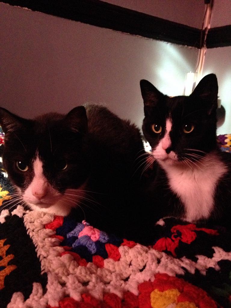 loanercats
