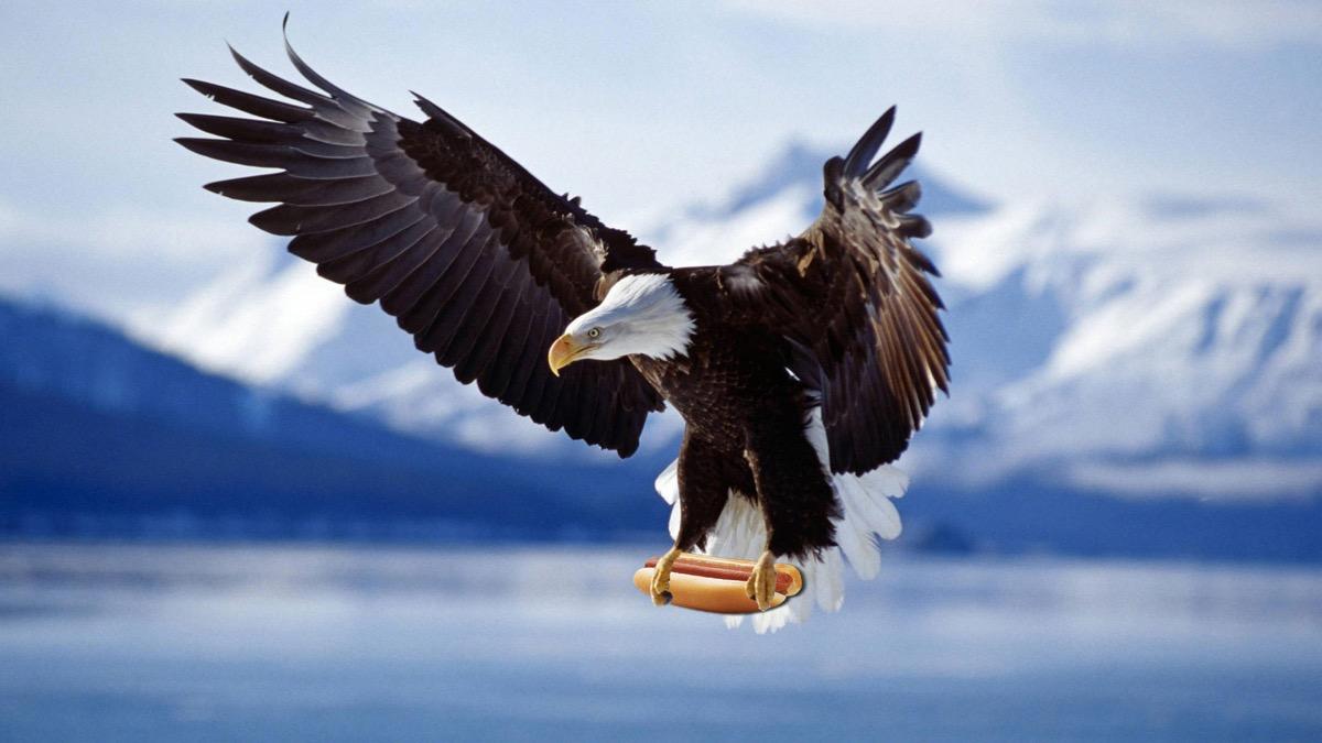 amazing-eagle-hotdog (1)