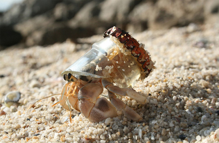 crab_bottle_top